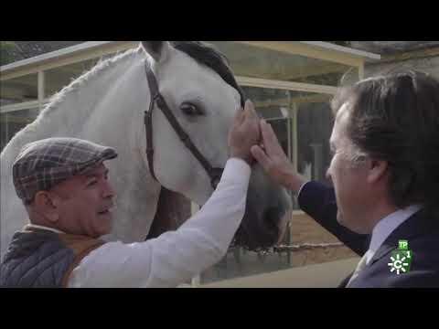 TodoCaballo | Aprende a distinguir un caballo de pura raza española