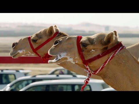 The One MILLION Dollar Camel Race! | Wild Arabia | BBC Earth