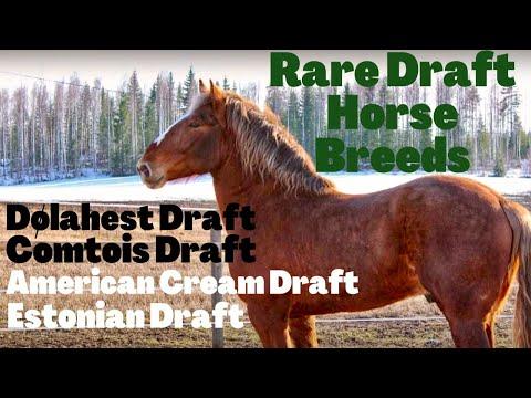 Rare Draft Horse Breeds | Dølahest | Comtois | American Cream Draft | Estonian Draft |SoTheAdventure