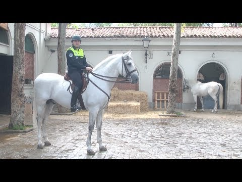 Así mima la Policía Municipal de Madrid a sus caballos