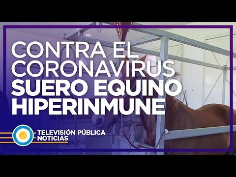 Suero equino hiperinmune: un avance argentino contra el COVID-19