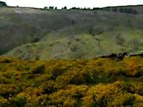 Wild Horses in Galicia, Spain