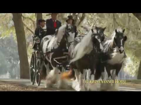 The Gypsy Vanner Horse - Trailer
