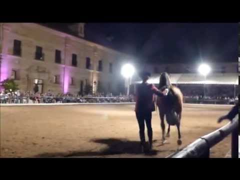 NIGHT SHOW @ Royal Stables / Caballerizas Reales (CORDOBA, Spain)