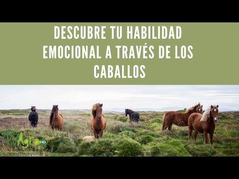 DESCUBRE tu habilidad EMOCIONAL a través de los caballos - TvAgro por Juan Gonzalo Angel