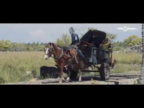 Horses of Gili