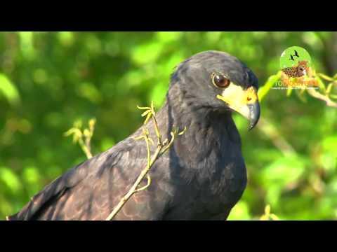 ProBiodiversa - Fauna de los Llanos en Hato el Cedral - Venezuela (DEMO)