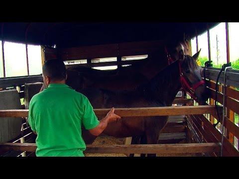 Bioseguridad en equinos - TvAgro por Juan Gonzalo Angel