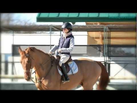 Equitación 1. Introducción