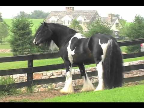 The Gypsy Horse TV Series- Season ONE