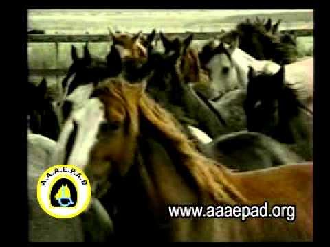 AAAEPAD. Asociación Argentina de Actividades Ecuestres para discapacitados