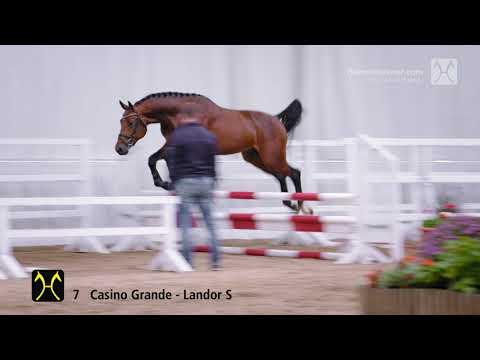 Hanoverian Stallion Licensing 2018- No. 7 Stallion by Casino Grande - Landor S