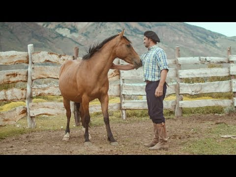 Wild Patagonian Horse Is Masterfully Tamed   Wild Patagonia   BBC Earth
