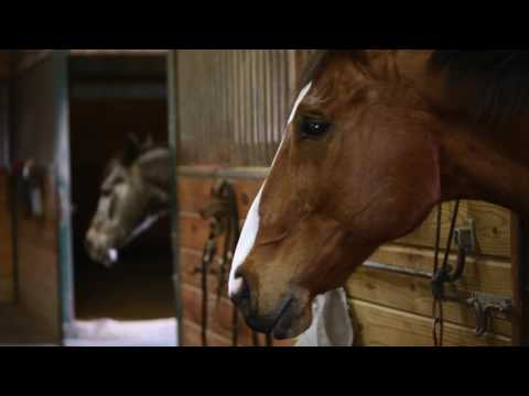 Gettysburg horse takes up painting after retiring from the race track
